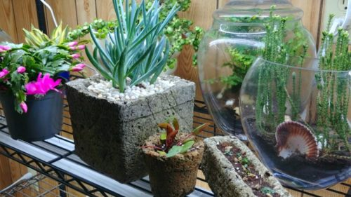 How About Hypertufa For HousePlants? It Works Inside!