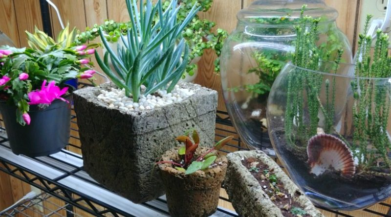 How About Hypertufa For House Plants? It Works Inside!