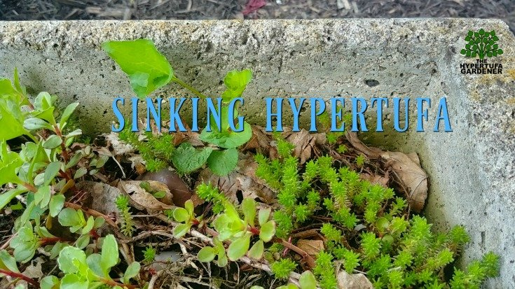 One of my garden chores_ Sinking hypertufa planter needs planting