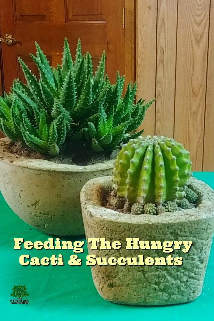 Cactus care - feeding the hungry cacti