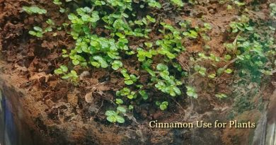 Cinnamon use for plants - It's a miracle in the garden