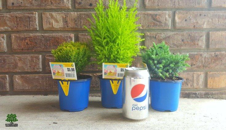 Mini-shrubs to fill my new planter