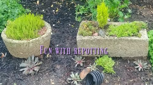 Moving Hypertufa Pots, Another RePlant & Rip Up Bushes