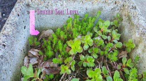 Fixing My Sunken Soil Levels – An Excuse To Buy Plants?