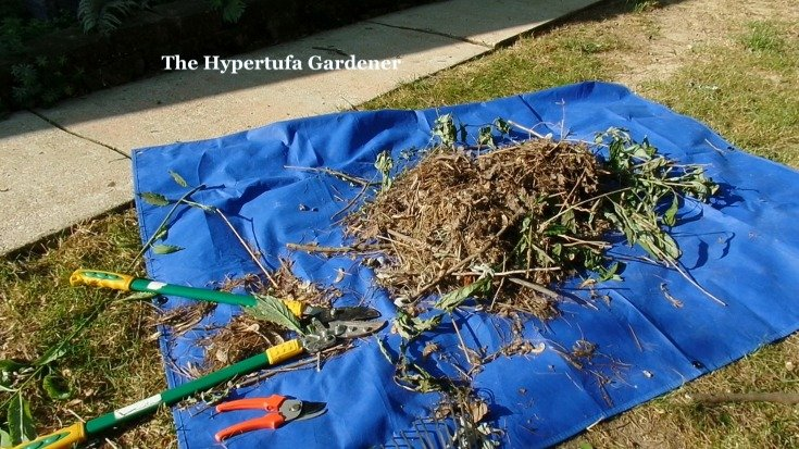 image of pruning tools and cut branches on tarp