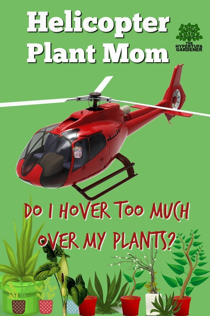 Helicopter Plant Mom - Do I hover too much over my plants