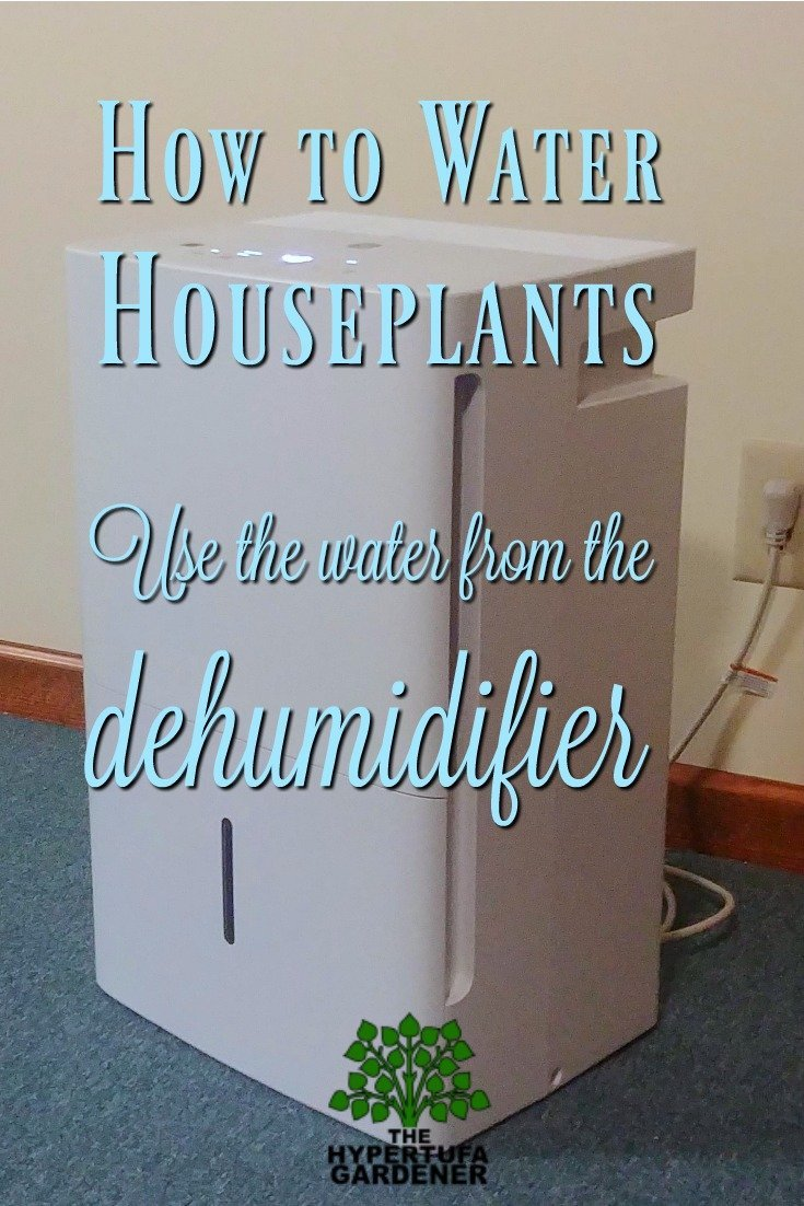 How to water houseplants - use the water from the dehumidifier