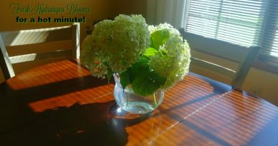 Midsummer garden chores - fresh cut hydrangea