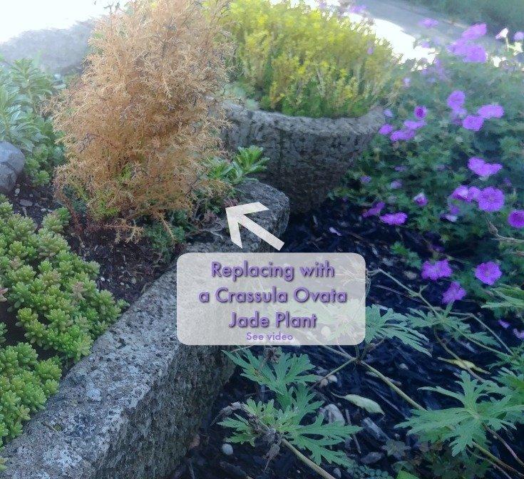 Replacing a dead plant - Garden chores