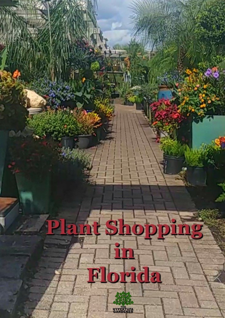 A plant shopping tour in Florida - What a difference a zone makes