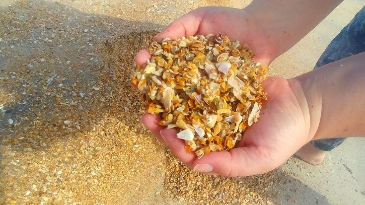 Future project from crushed beach shells