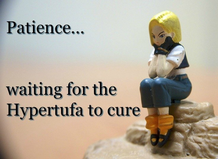 image of lady with Patience - we need that when curing hypertufa