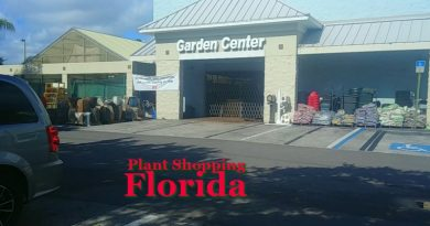 Plant shopping in Florida - Just how different is it
