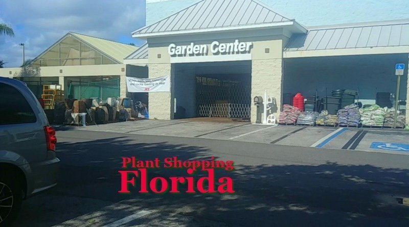 Plant Shopping in Zone 9 Florida – Wonderful Selection of Plants!
