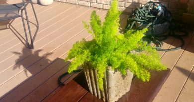 A new hypertufa planter with foxtail fern