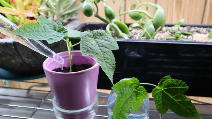 Propagation in soil and water