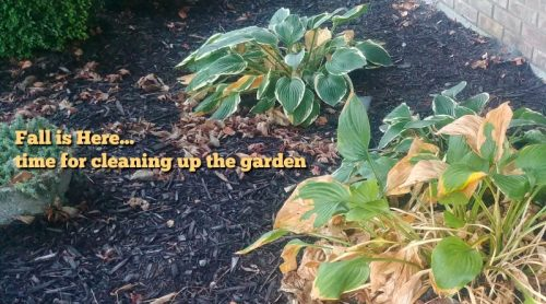 Fall Is Here! Time For A Little Garden Clean Up I've Dreaded
