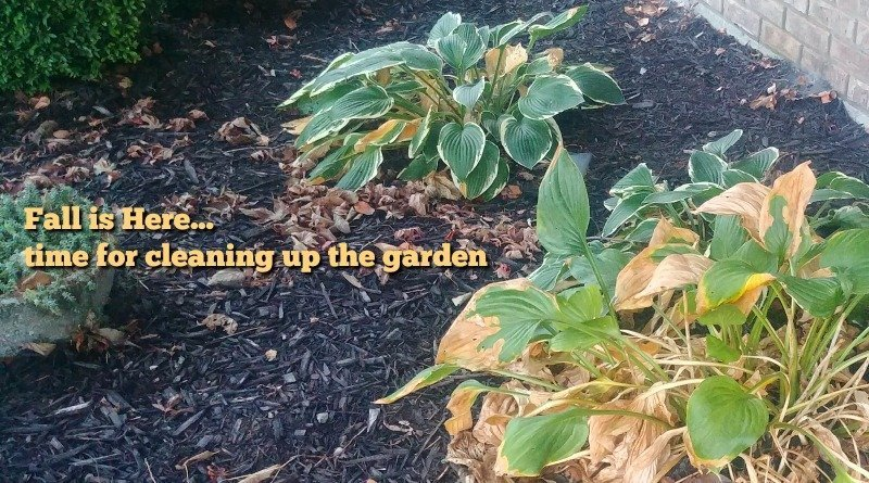 garden cleanup for fall
