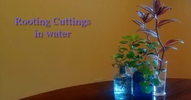 photo of 4 small bottle with houseplant cuttings