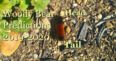 image of woolly bear