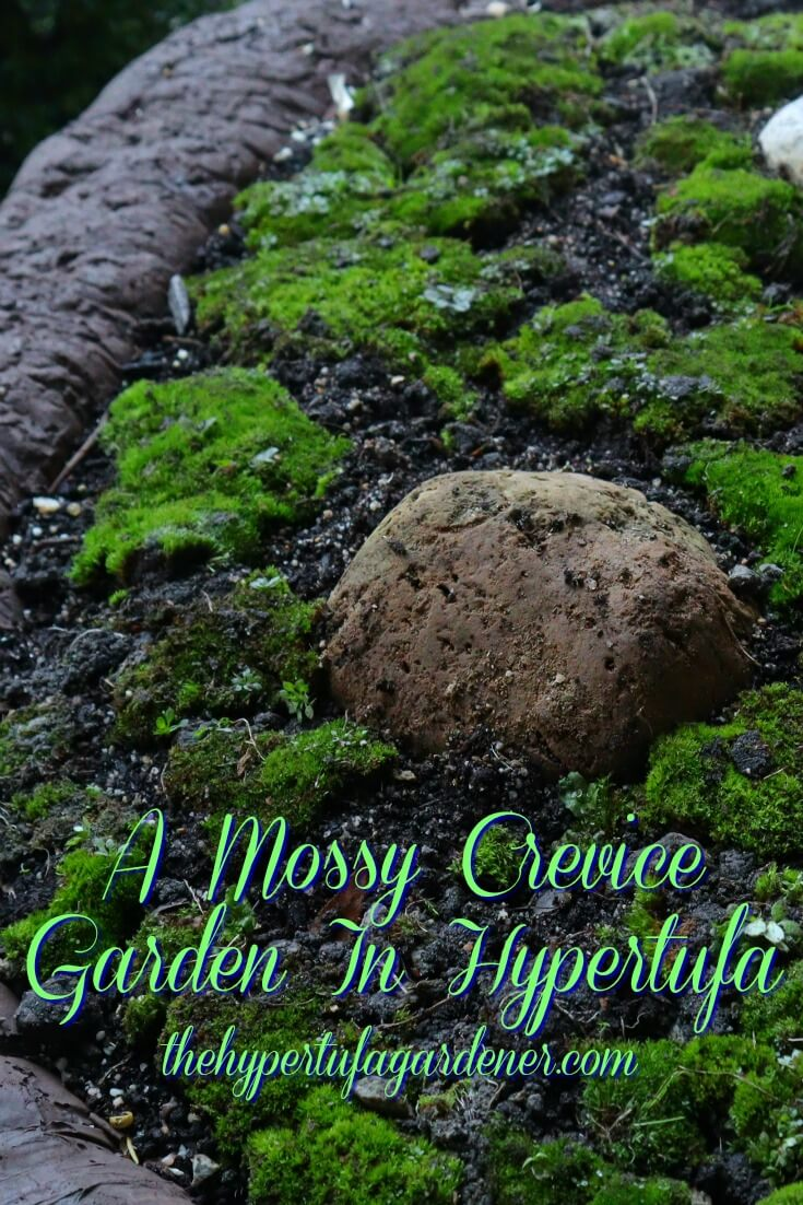 image of mossy crevice garden