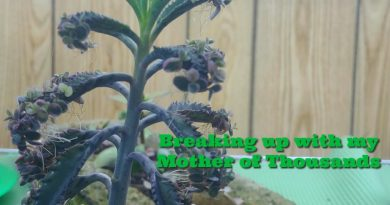 image of Mother of Thousands