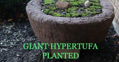 image of planted hypertufa moss garden