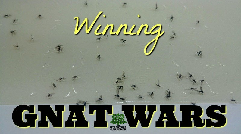 image of fungus gnats stuck on trap
