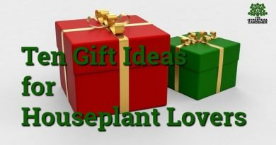 10+ Best Gifts for Houseplant Lovers