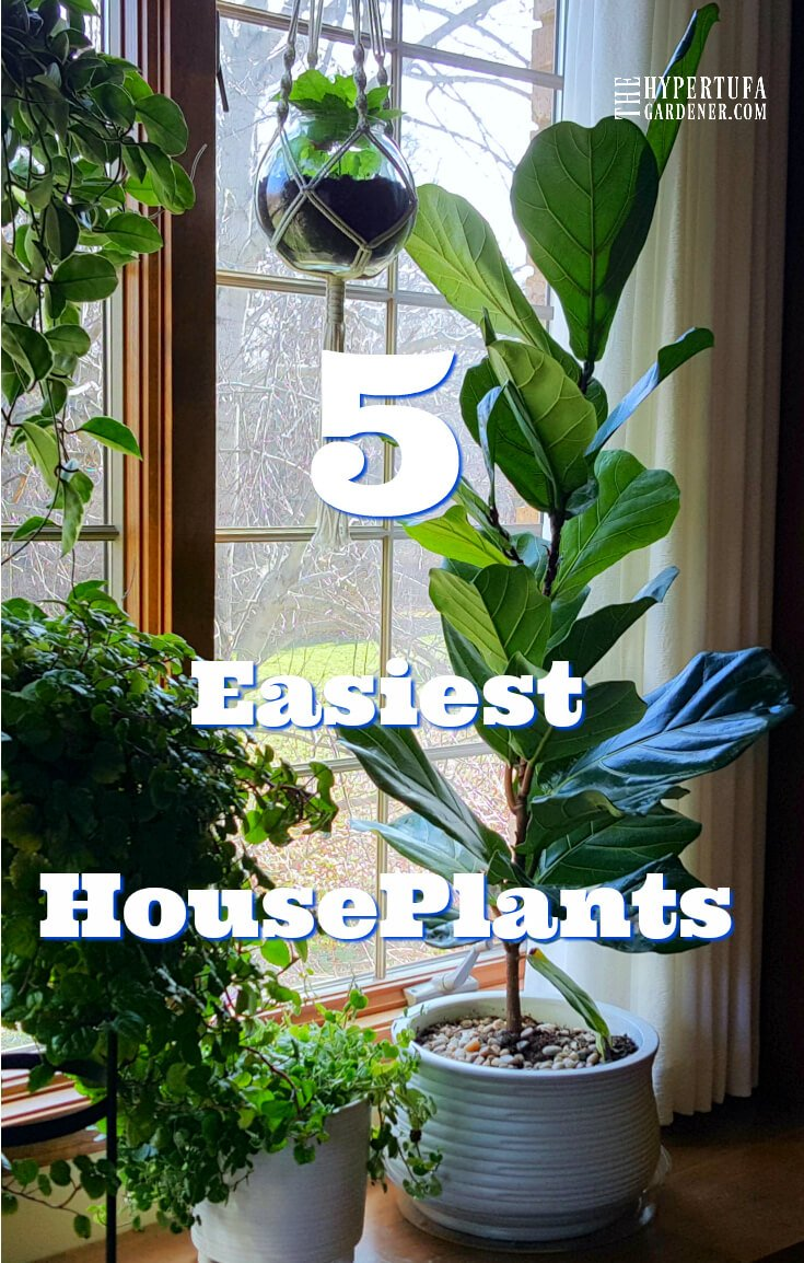 image of houseplants in window