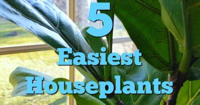 5 Easiest Houseplants To Grow