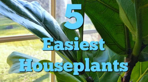 5 Easiest Houseplants To Grow