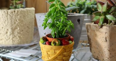 New Plant Pick :  Peperomia axillaris or Taco Plant