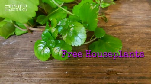 Let's Get Started! Free Houseplants From Cuttings! – Free Plants for Outdoors