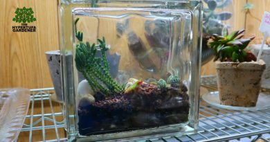 image of mini glass block terrarium