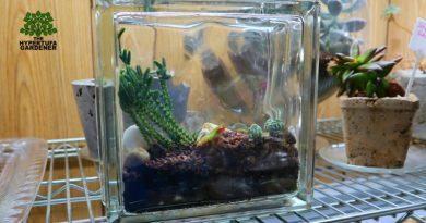 Found A Mini Glass Block At Goodwill – Let's Make A Terrarium!