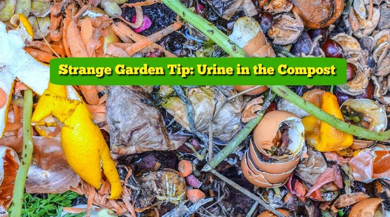 image of compost pile