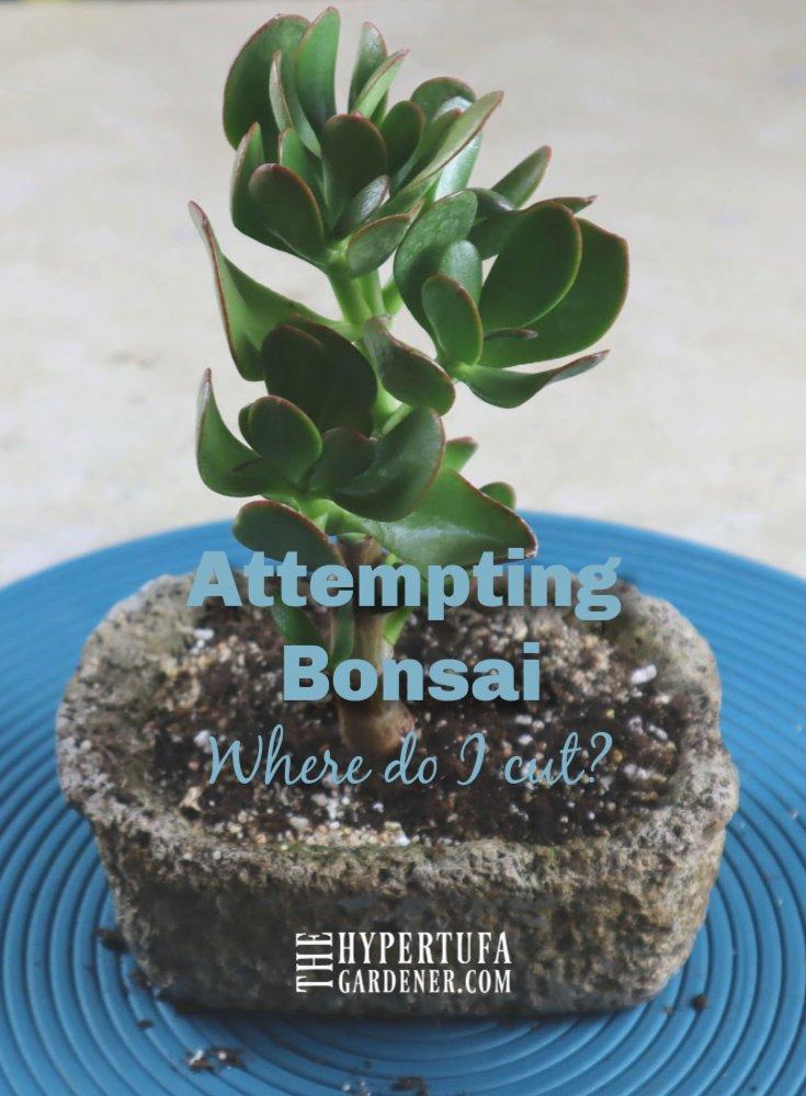 Image of bonsai in hypertufa pot