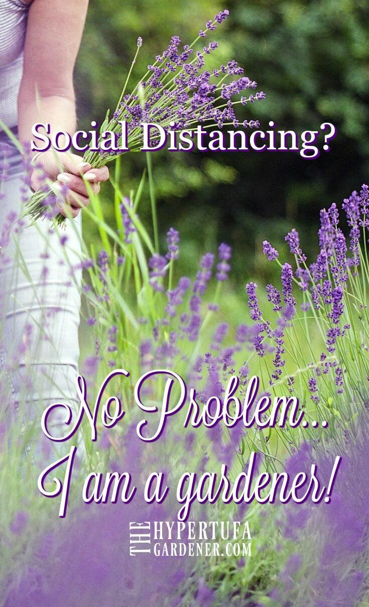 lady in a field of purple flowers