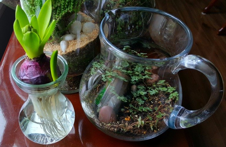 image of hyacinth in vase