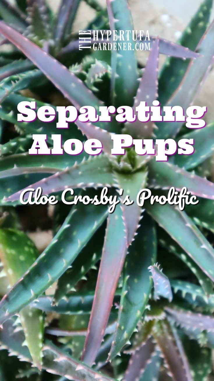 image of Aloe Crosby's Prolific