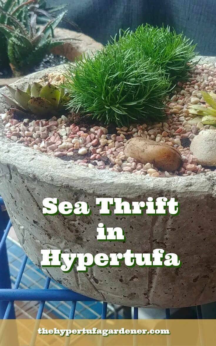 image of sea thrift planted in hypertufa bowl