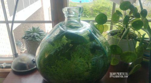 Go For The Sealed Bottle Terrarium?