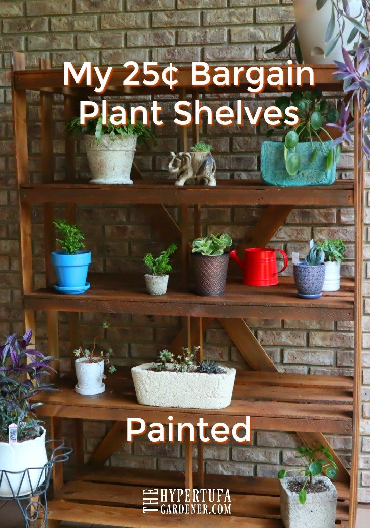 image of plant shelves with plants