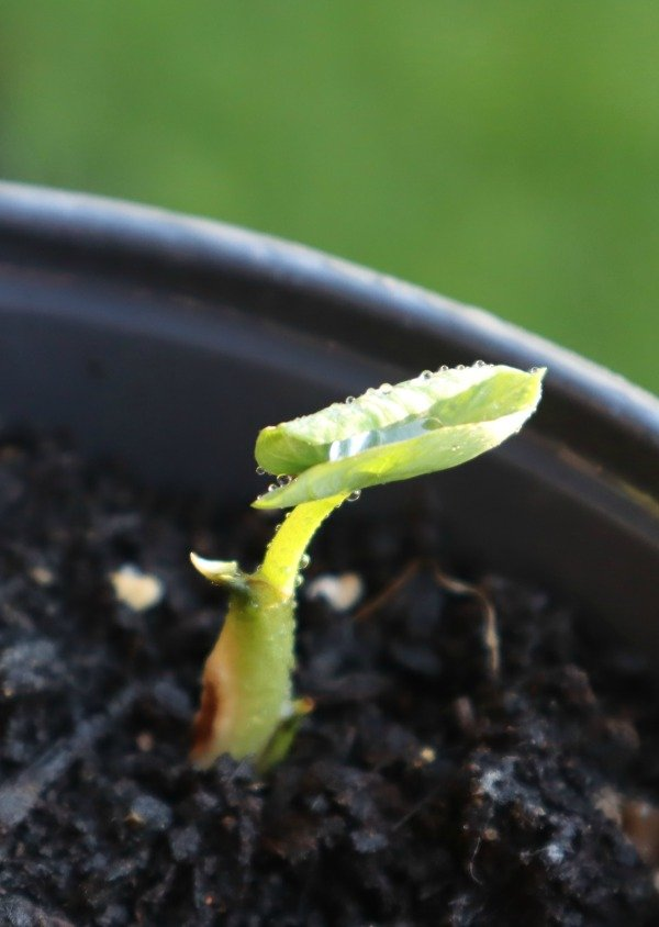 image of tiny sprout in my garden