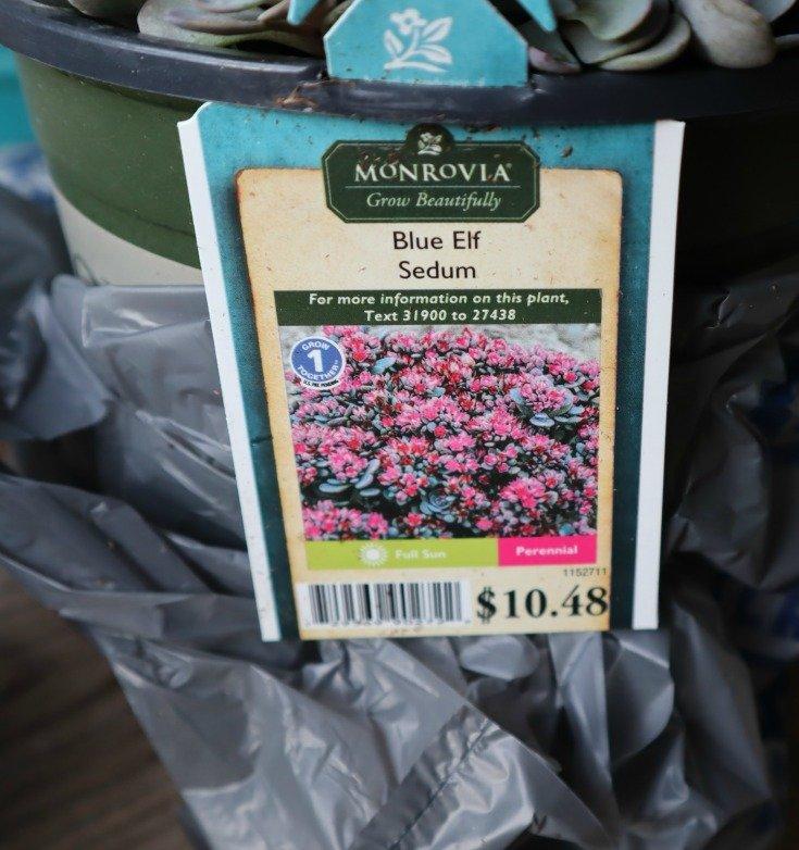 image of nursery pot $10.48 for Blue Elf Sedum
