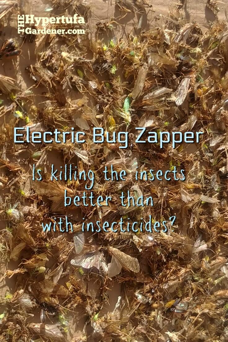 image of a pile of dead insects under an electric bug zapper
