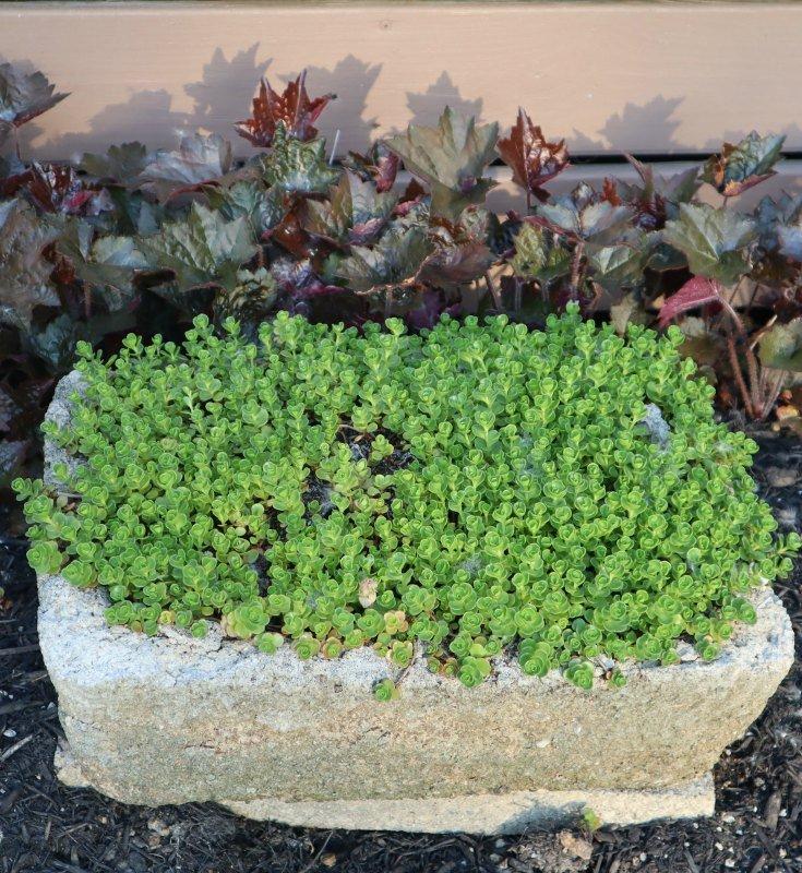 image of hypertufa plant with sedum John Creech