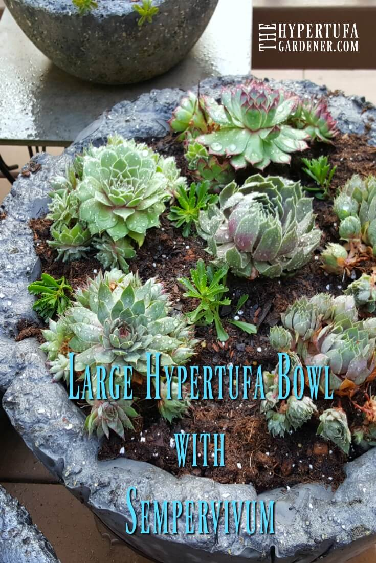image of large hypertufa bowl with hens and chicks planted