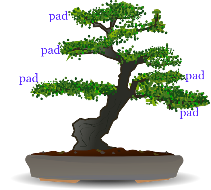 image of bonsai labeled as pads on the tree